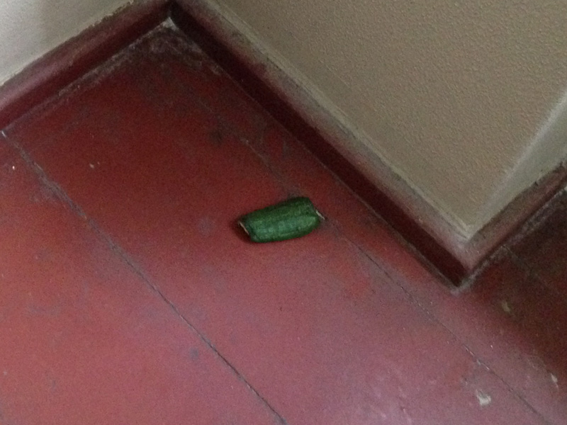 Picture of a cucumber in the hallway
